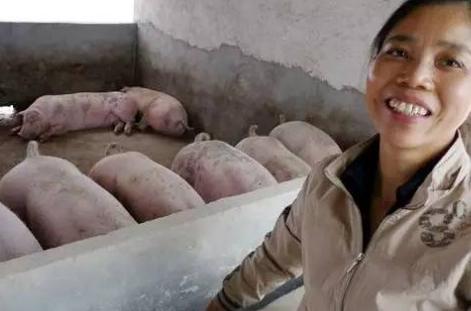 8月份生猪面临的最大问题,不是猪价而是这个