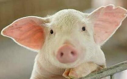 """""""猪周期""""下行刚起步,猪企利润将持续走低……"""