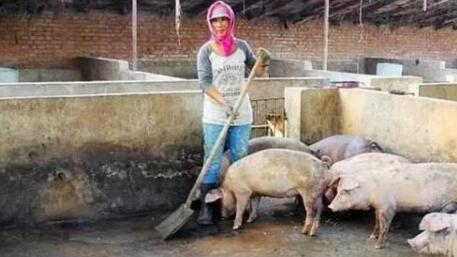 预测:猪价现在跌得越凶,下一次就会涨的更狠?