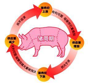 """生猪体重普遍增加,将如何应对下一次的""""猪周期"""""""