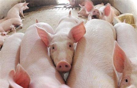 今年生猪价格还有大涨可能吗?现在养猪能赚钱吗?
