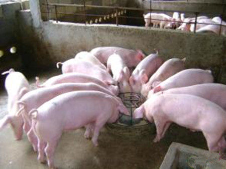 供需相互制衡,生猪价格依旧深陷局中而难以自拔