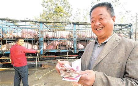 为什么有人养猪年挣百万,你养猪却一年比一年效益差