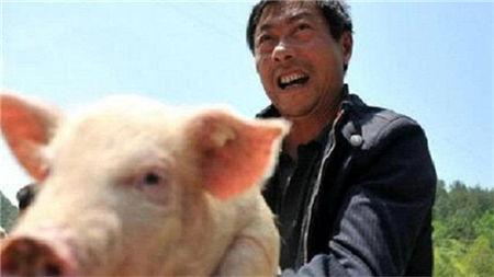 用二十年的亲身经历告诉你,养猪是真的可以赚钱!