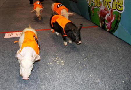李曼养猪大会史上最震撼的一次盛宴,共享满满的干货与欢乐