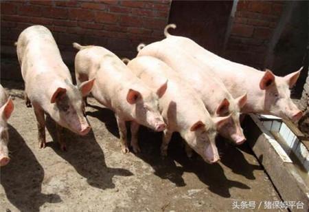 猪场粪污处理,源头是关键
