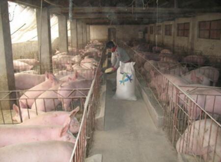 养猪业正在大换血,这5类猪场将是首批被淘汰者……