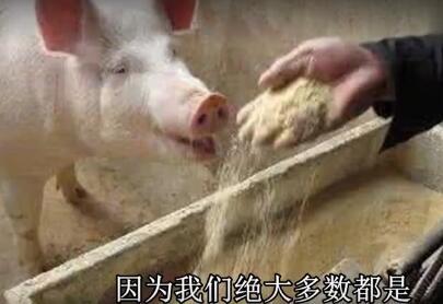 一头猪的一生,看了不下8遍!