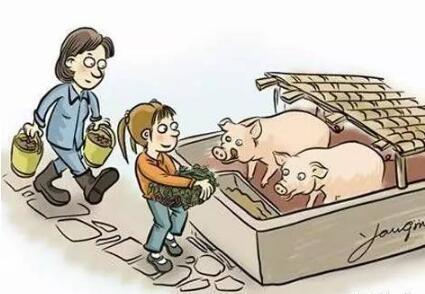 猪场PSY、MSY,哪个更能揭秘猪场效益?真相只有一个!