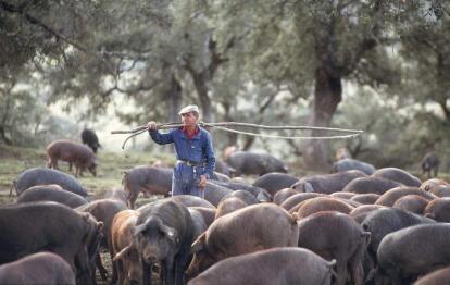 一周综述:猪价上涨速度过快 此轮涨势或有中断危险