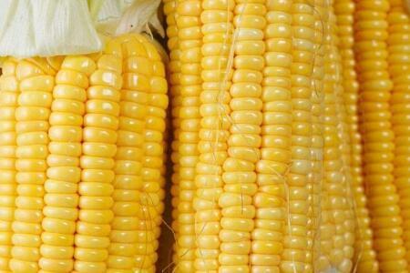 玉米价格下跌 后市玉米价格如何 玉米市场静待拐点!