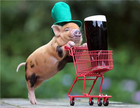 海南今年将关闭未配备检验检疫人员的生猪屠宰场!