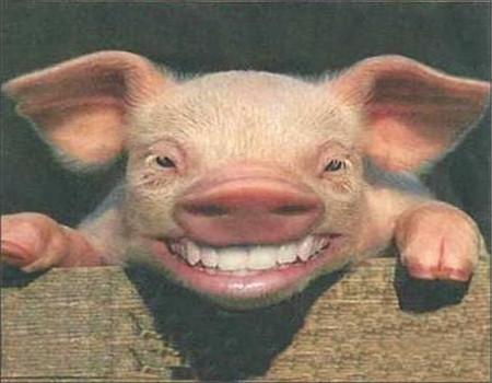 教你几招农村常见的猪病防治措施!