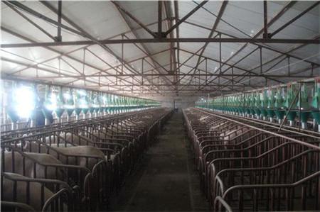 农业部:下一步把东北打造成全国猪肉产品重要供应基地