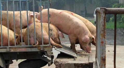 猪舍取暖功率计算!
