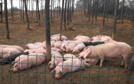 中小型养猪场如何赚钱又环保?这几个案例告诉你