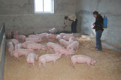 一个会说话的养猪管理数据