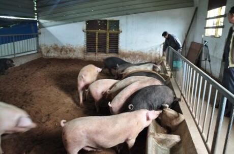 农业部:上半年全国饲料质量抽检合格率达96.43%