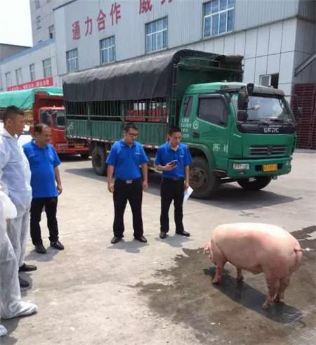 """重庆通威组织""""杀猪会"""",验证猪场专用料使用效果"""