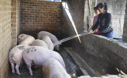 好消息?未来几年内我国能繁母猪的存栏量将急剧下降