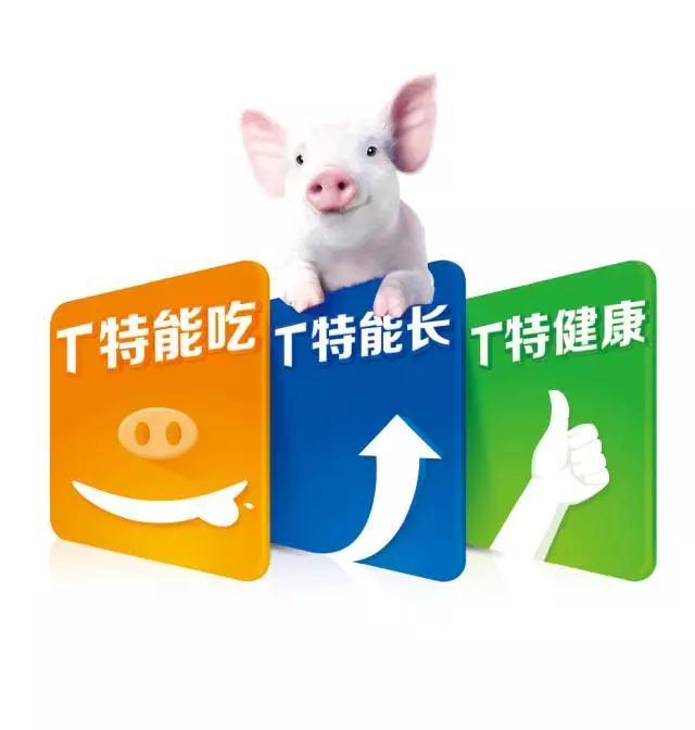 TTT乳猪教槽料:特能吃  特能长  特健康。