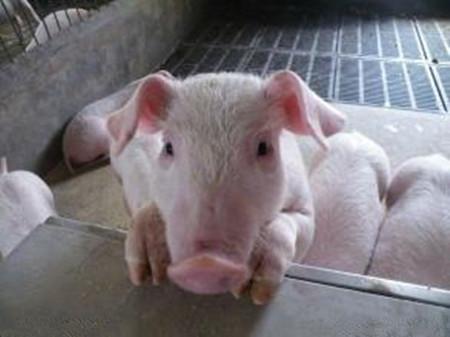 嘉积镇为整改拆除的养猪场联系买家 为养殖户介绍工作