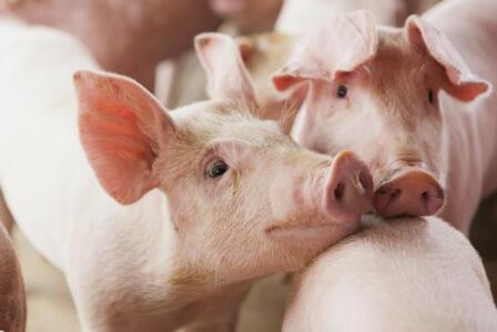 在我国,畜牧养殖可以领到这些补贴……