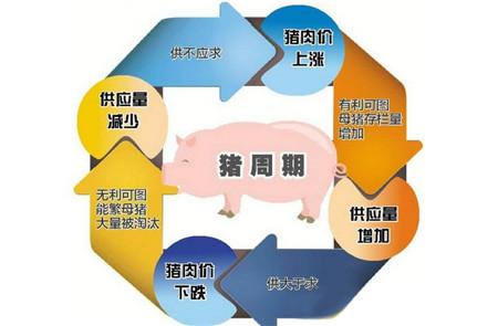 难逃猪周期魔咒 上半年11家上市农牧企业一半利润下跌