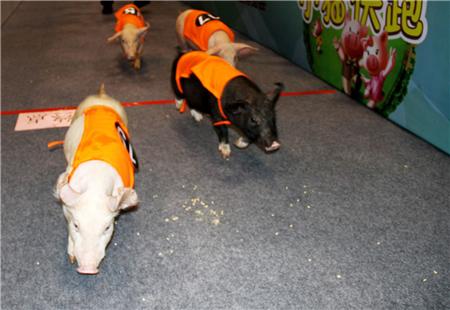 世界猪业博览会史上最震撼的一次盛宴,共享满满的干货与欢乐