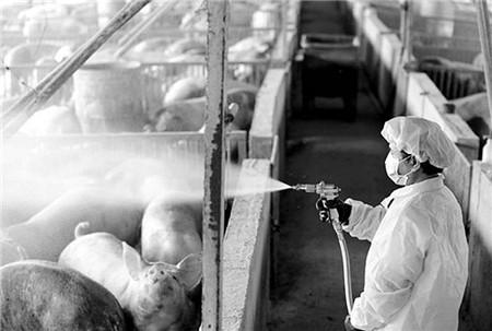 夏季喂猪的八项注意,养猪人你知道吗?