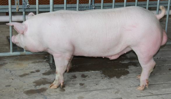 全国猪价和肉价全线猛涨!我们该担心通胀了?