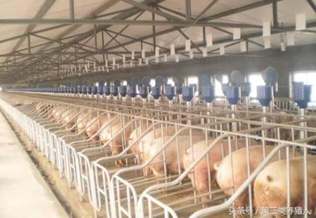 未来猪价最有可能在哪个区间稳定?养猪业会有何变化
