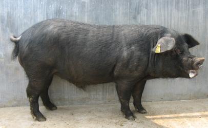 生猪等农产品将优先纳入全国农产品质量安全追溯系统
