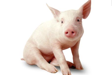 真相!进口猪肉居然是猪价上涨的利好因素
