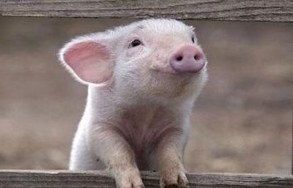 郑州市动物卫生监督所约谈部分外埠入郑生猪屠宰企业