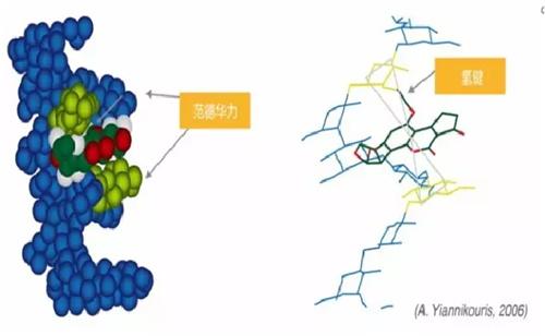 净霉宝——强效吸附脱毒+酶解+解毒+抑霉+功能调节
