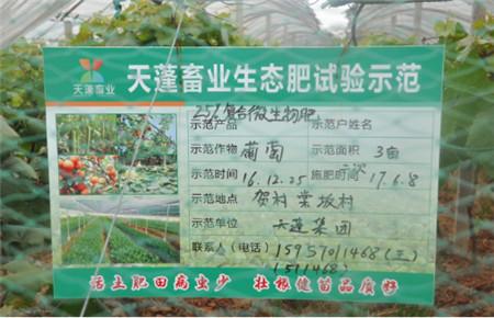 """天蓬集团:天蓬有机肥竟然滋养出""""珍珠""""~"""