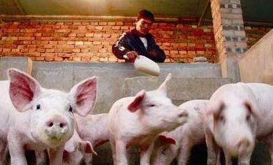 目前猪价趋势暂时不改变 9月中旬前将以上涨为主