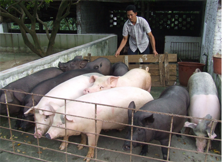 生猪屠宰场一直在压价——是试水?还是潜伏危机?