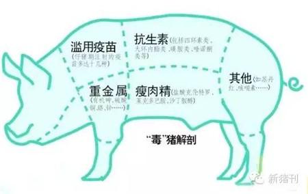仔猪黄白痢成当下发生最多猪病,看看新生态兽医是怎样防治的?
