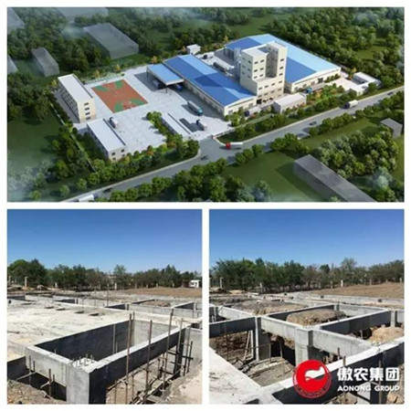 新疆傲农高效饲料生产基地建设进展顺利