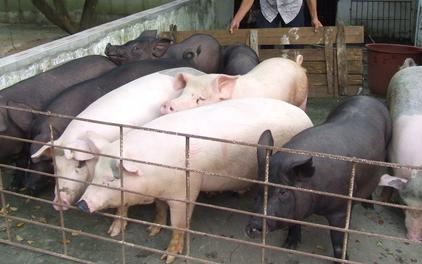 美国与阿根廷签署猪肉出口协议