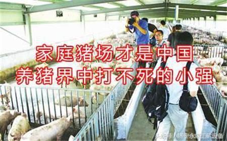 环保高压下猪价企高 散户转型家庭猪场的可行性分析