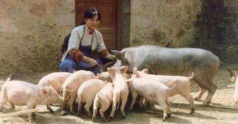未来将会迎来一个生猪供应大断层,接下来赚翻你!