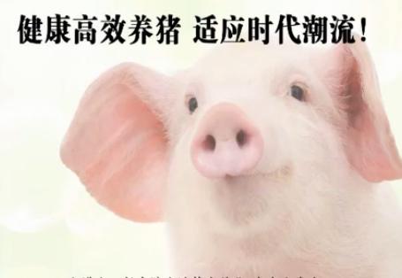 技术干货 健康高效养猪 适应时代潮流