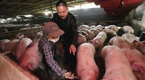 接着涨!近期猪价将创新高!目标7.8~8元!