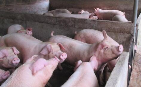 猪价是否已进入下滑周期?猪价下滑可能是这个原因