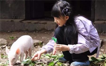 10种常见猪病的简单治疗方法,养殖户你会吗?