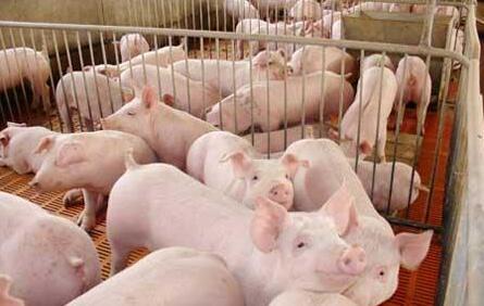 近年猪周期规律失灵,环保打乱了猪市产能的恢复轨迹!