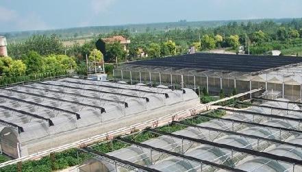 壕!天邦股份拟投资24亿元建西式母猪场及配套项目